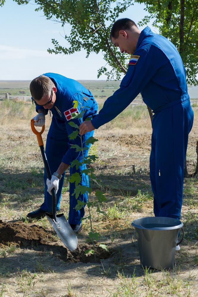 Andreas Mogensen, ağacını dikiyor. Baykonur tree