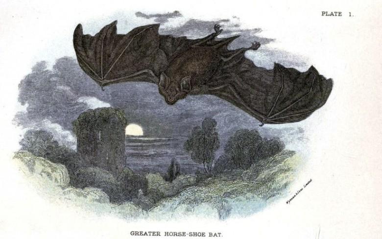 Dolunayın olduğu arka plana sahip Büyük nalburunlu yarasa çizimi, British Mammals, 1896