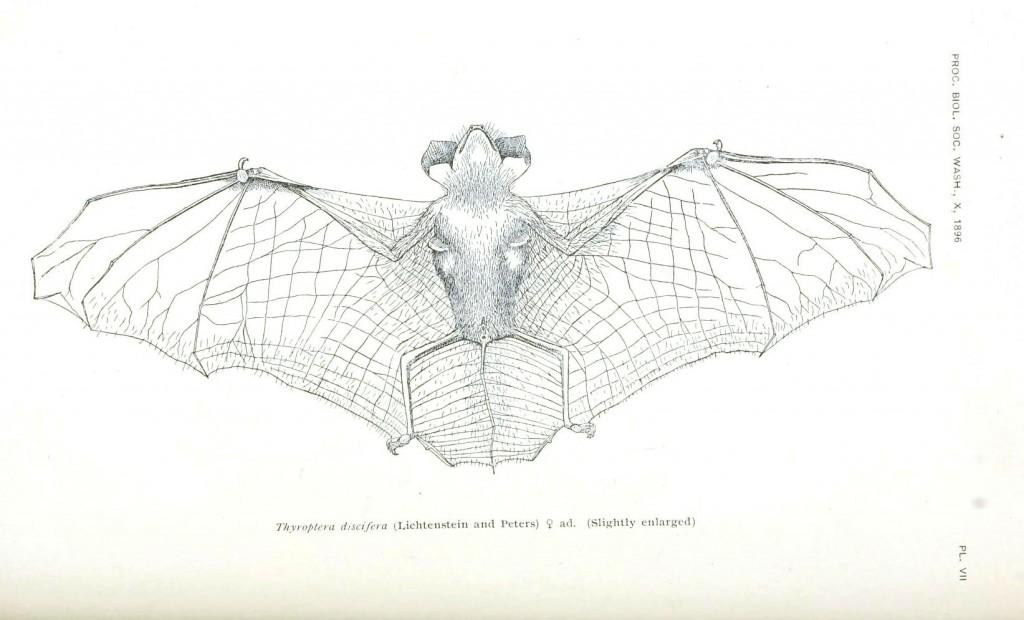 kanatları açık bir yarasa çizimi siyah beyaz