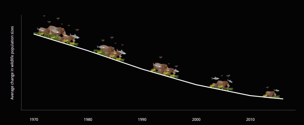 yaban hayatı tükeniyor - yaşayan gezegen raporu 2020