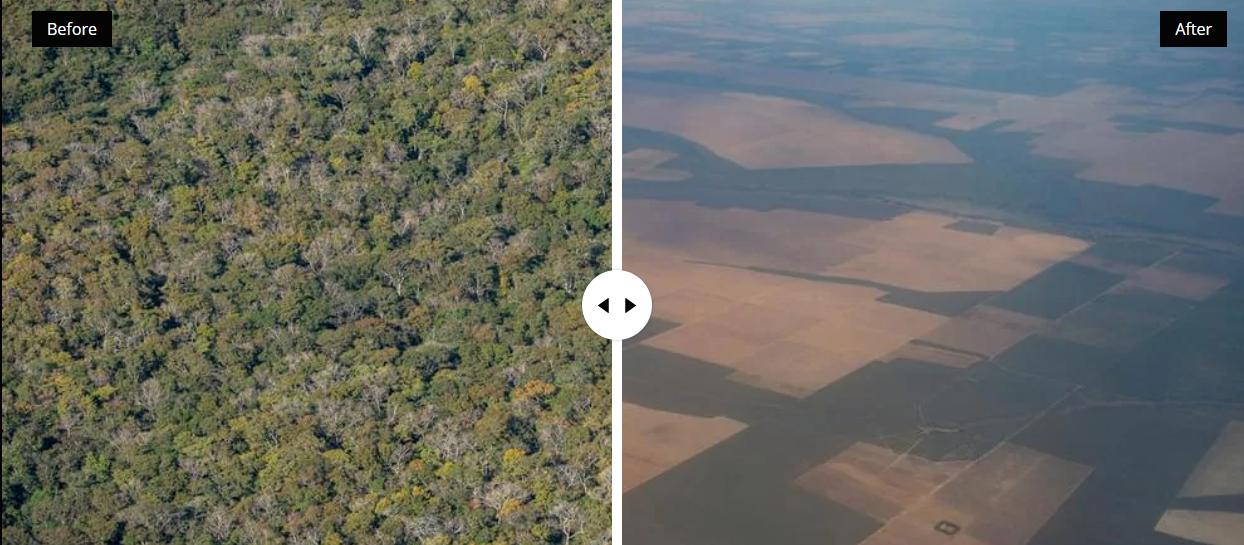 WWF yaşayan gezegen raporu 2020