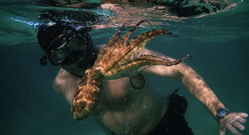 Craig Foster ve arkadaş olduğu ahtapot beraber yüzerken.