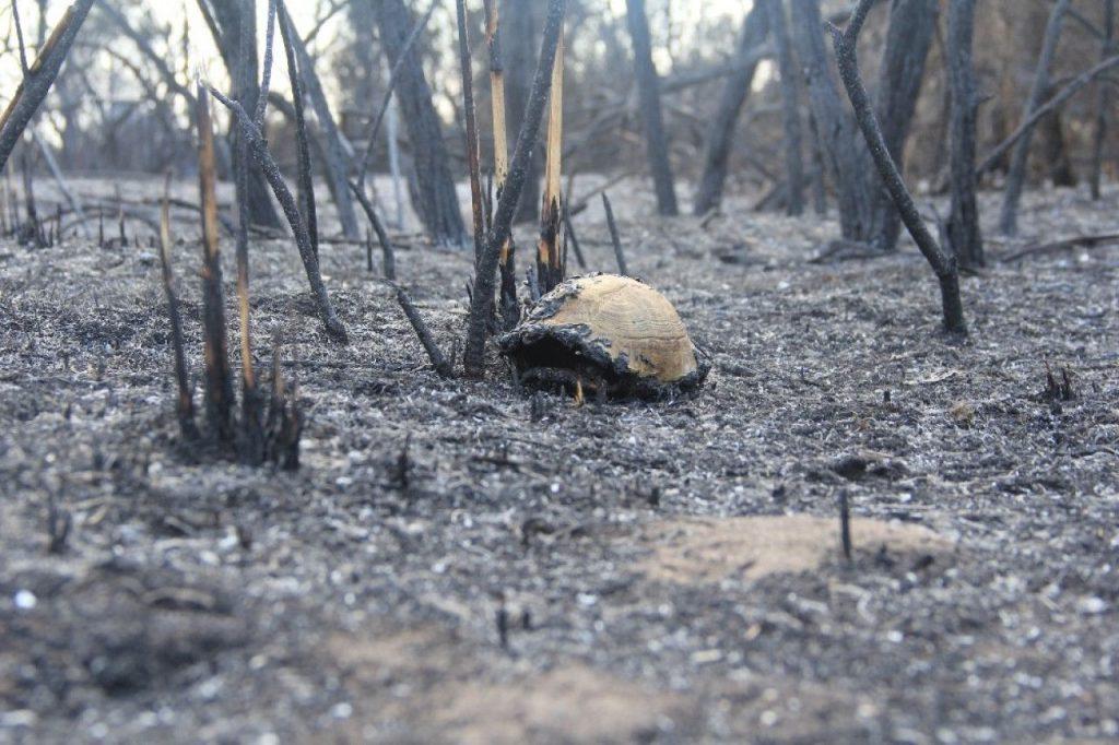 Kızılırmak Deltası yangın