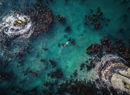 dronela denizin yukarıdan görüntüsü. ortada foster yüzüyor.