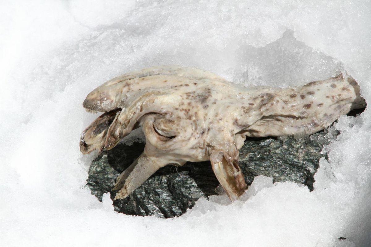 alplerde ortaya çıkan cesetler