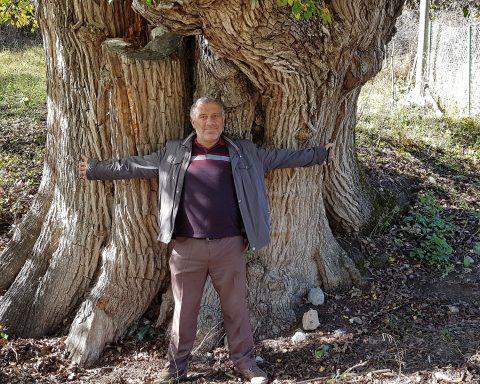 Artvin 1500 yıllık dünyanın en yaşlı armut ağacı