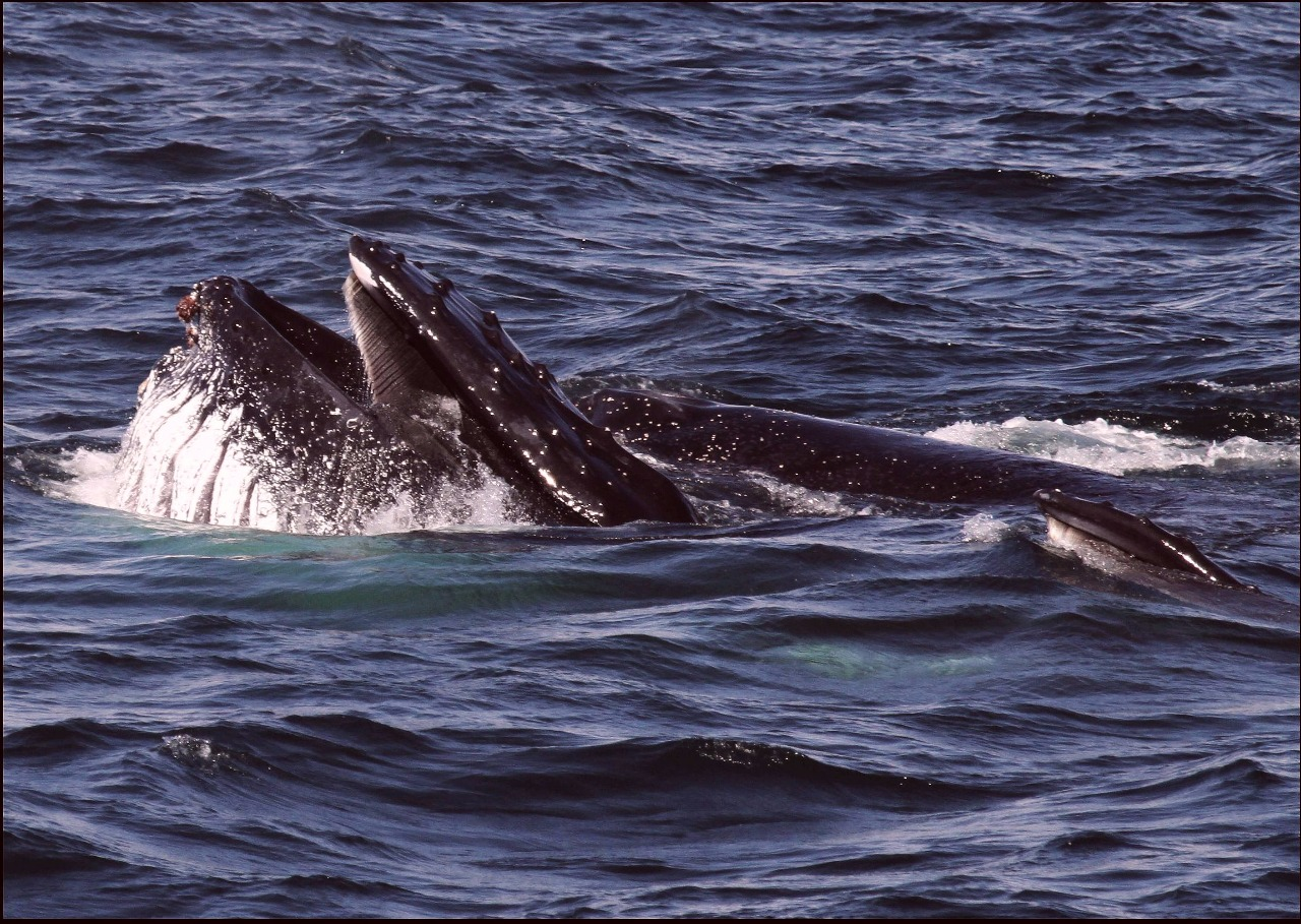 nesli tehlike altındaki deniz memelileri