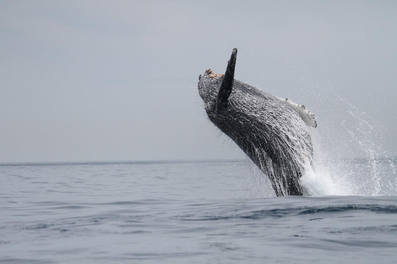deniz memelileri nesli tehlike altında