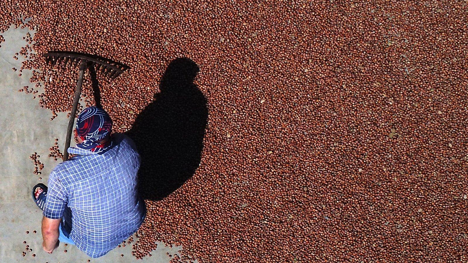 fındık üretimi ve iklim değişikliği etkisi