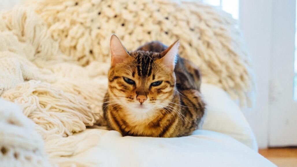 kedi koronavirüs ilacı