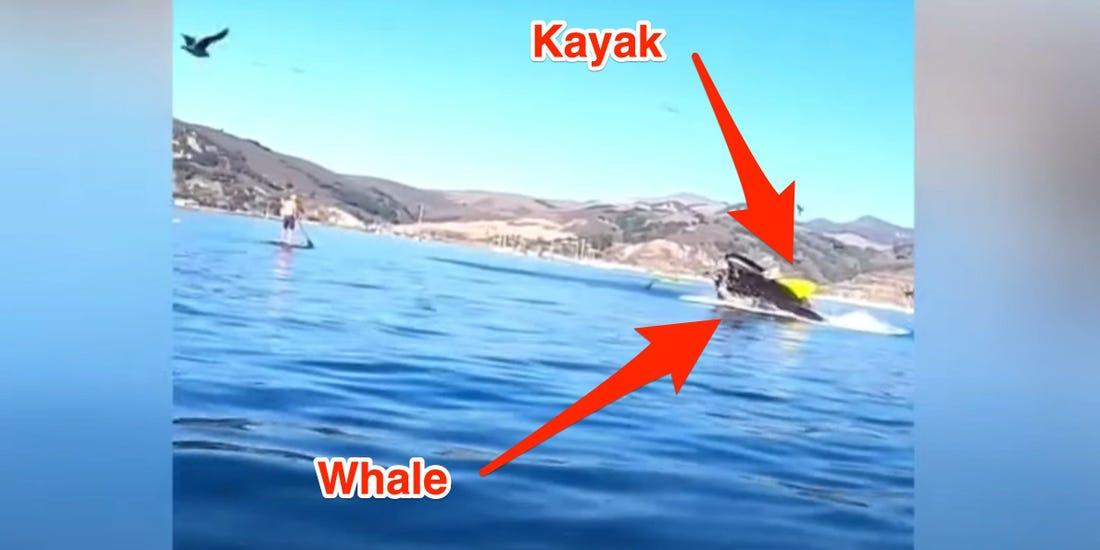 kambur balina kanocuları yutuyordu