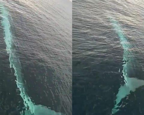 Adana'da balıkçıların görüntülediği balinanın fotoğrafı balina su üstünden rahatlıkla görünüyor.