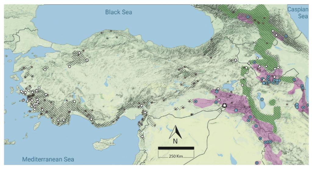 Türkiye haritası üzerinde anadolu parsının bulunduğu bildirilen bölgeler. genel olarak güney doğu analdoludan bildirimler var.