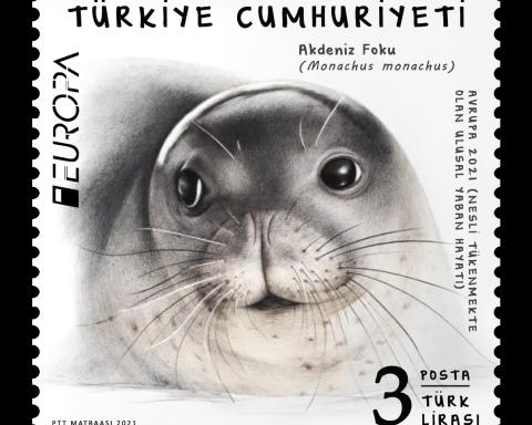En İyi Avrupa Pulu için bir Akdeniz Foku yüzü içeren arka planı beyaz olan kare pul tasarımı. sağ alt köşede 3 TL yazıyor